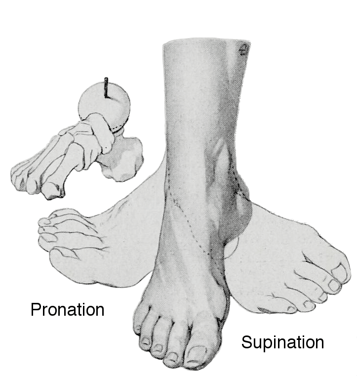 foot-pronation-can-cause-IT-Band-Issues-runners-guide-to-IT-band-syndrome