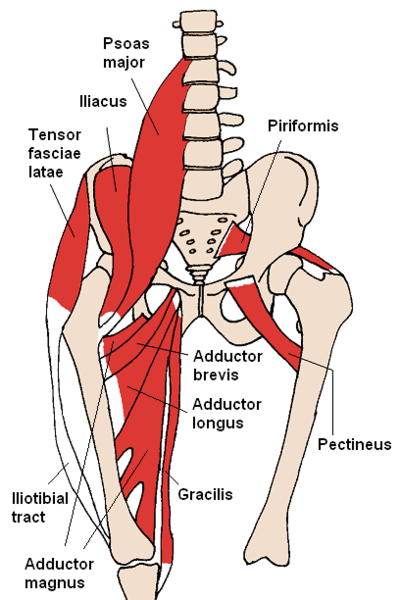 groin-injury-groin-pull-groin-tear-groin-anatomy