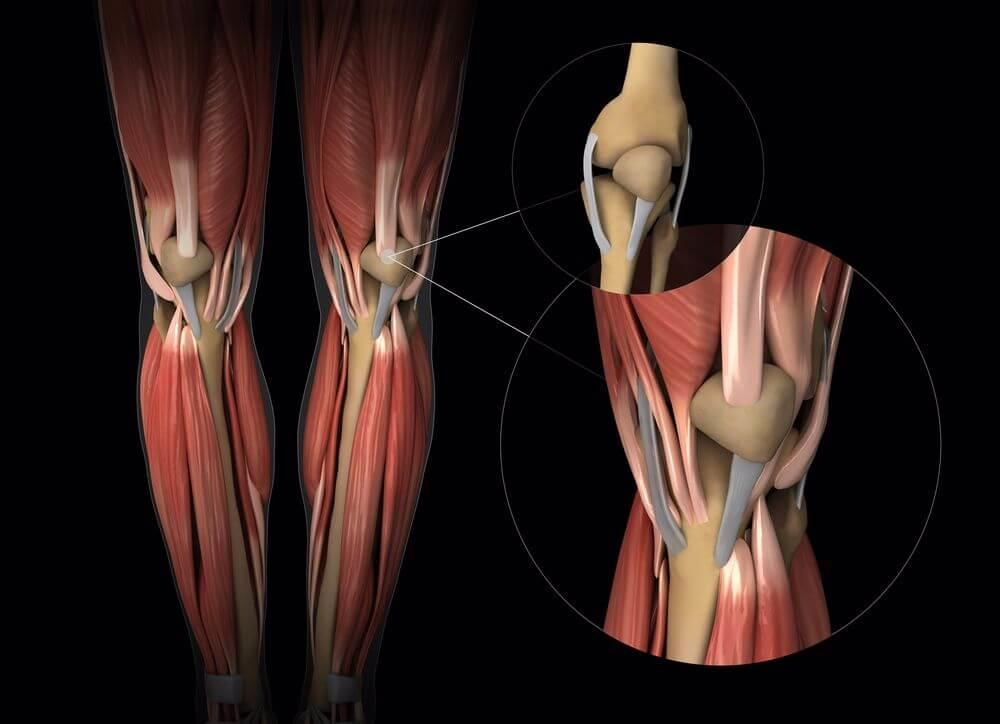 Synovitis-Synovial-tendons-and-muscle-anotomy