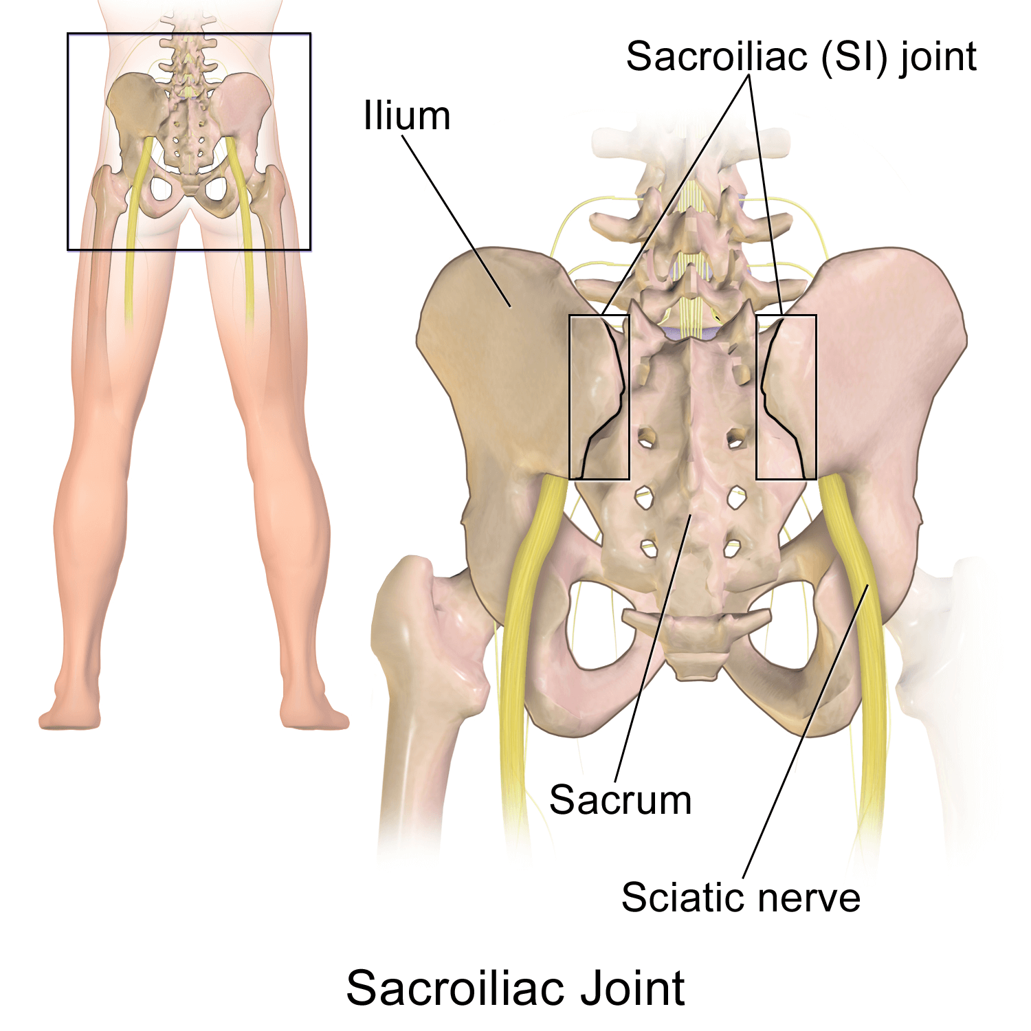 Sacroiliac SI Joint: Dysfunction, Pain, Treatment and Therapy