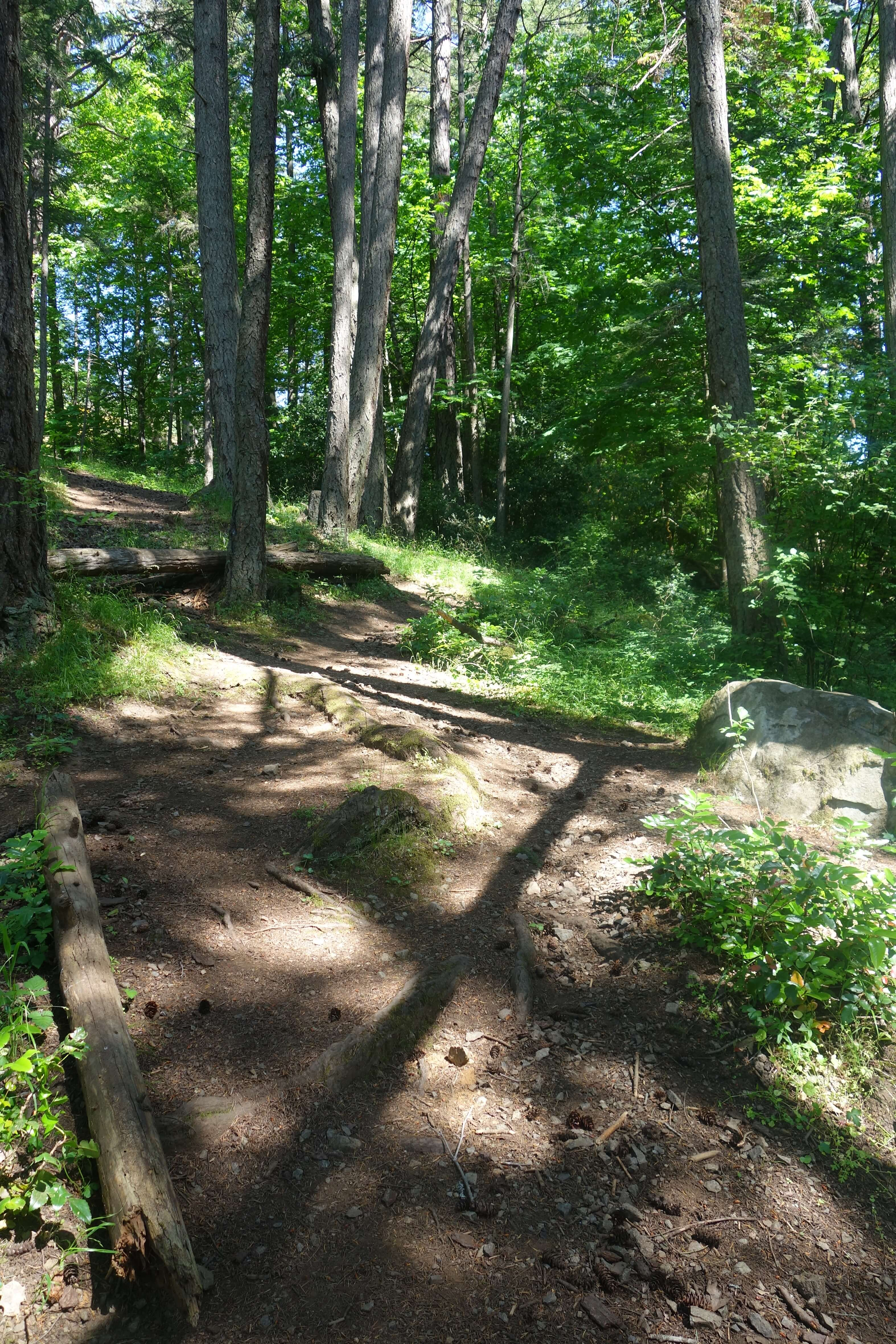 a zigzag dirt running trail through the forest