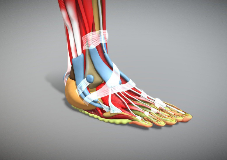 A Runner's Guide to Foot Anatomy