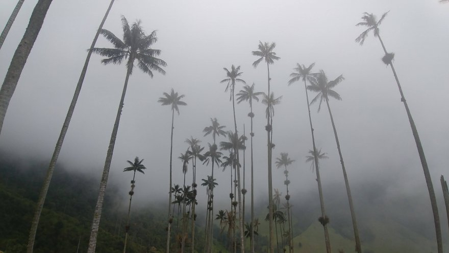Destination Run: Cocora Valley in Colombia's Coffee Region