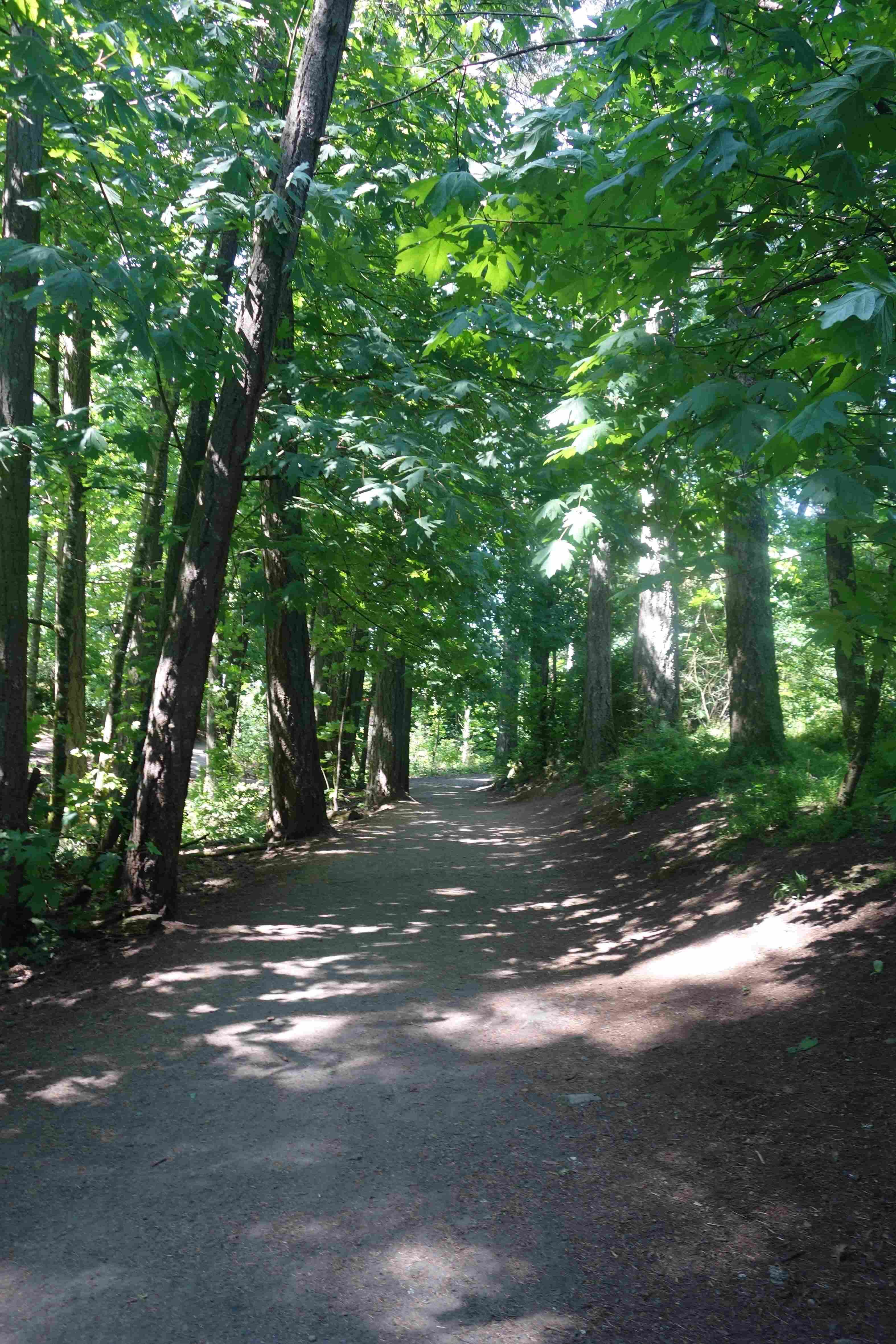 a sun-dappled dirt trail in the forest