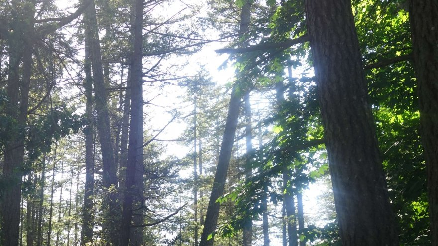 Destination Trail Run: Thetis Lake, Canada