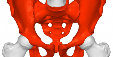 An in depth and comprehensive Runner's Guide Pelvic Injury