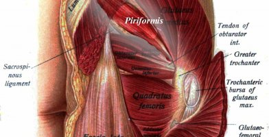 An in depth and comprehensive Runner's Guide Piriformis