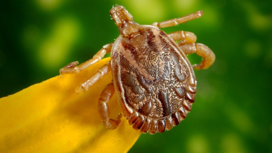 Tick bites and running: What you need to know.