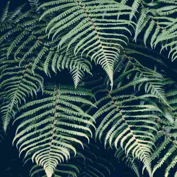nature-forest-plant-tropic
