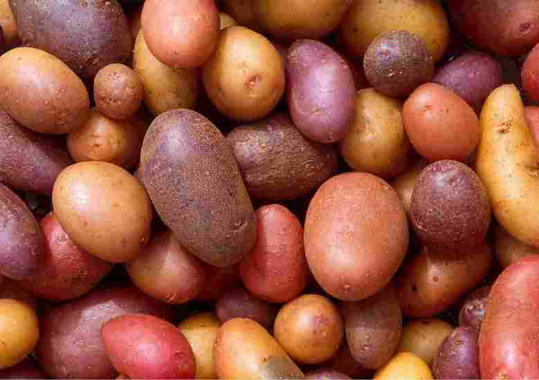 What are lectins and will they help you lose weight and be healthy?
